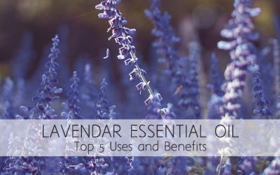Lavender Essential Oil – The Top Five Benefits and Uses